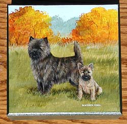 Square Box - Cairn Terrier