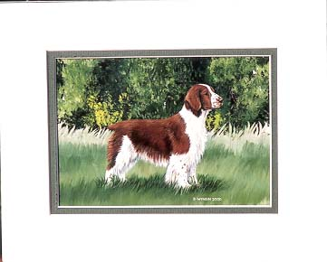 Welsh Springer Spaniel Painting