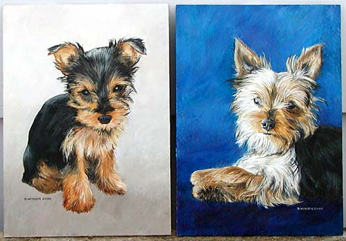 Yorkshire Terrier Commission
