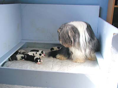 Yancey and her pups
