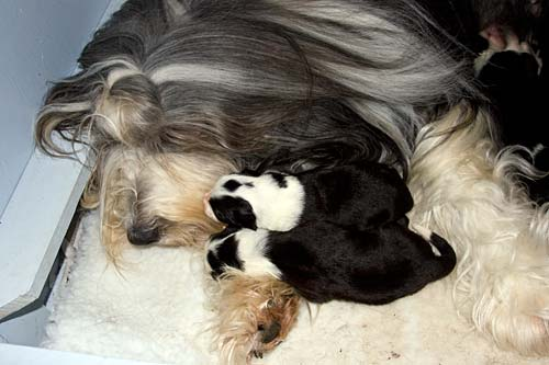 Danni and her pups